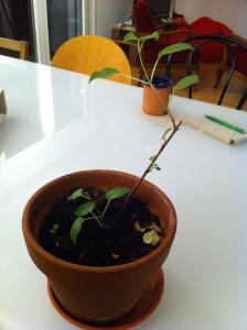 Fabiennes Pflanze
